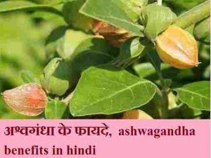 अश्वगंधा के फायदे, ashwagandha benefits in hindi