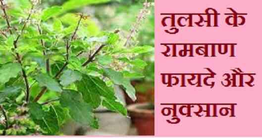 तुलसी के फायदे और नुक्सान, best tulsi benefits in hindi